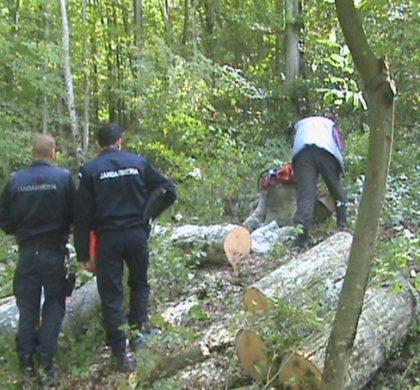 Cornel Zainea în Viitorul Ilfovean: amendamente pentru salvarea pădurilor virgine